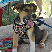 Adopt A Pet :: Scarlet - Byhalia, MS