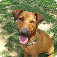 Adopt A Pet :: Dhalia - Lancaster, OH
