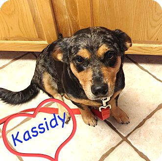 Rescue Dogs New Braunfels Texas