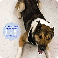 Adopt A Pet :: Roscoe - Bedford, TX