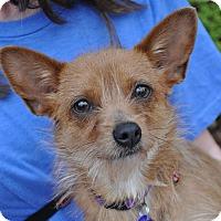 Adopt A Pet :: Grace Kelly - Atlanta, GA