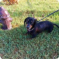 Adopt A Pet :: Herbert - York, SC