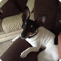 Adopt A Pet :: Rocky - Grand Rapids, MI