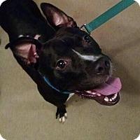 Adopt A Pet :: Danny - Dayton, OH