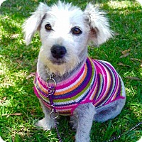 Adopt A Pet :: SOPHIA - Corona, CA