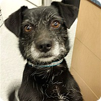 Adopt A Pet :: Grover - Scottsdale, AZ