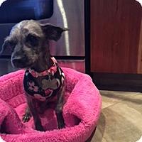 Adopt A Pet :: Kenzie - N. Babylon, NY