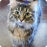 Adopt A Pet :: Marigold *FELV+* - Scottsdale, AZ