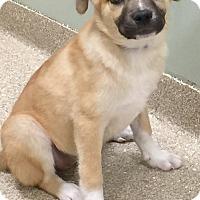 Adopt A Pet :: I'M ADOPTED Adorables
