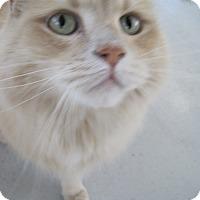 Adopt A Pet :: Willie - Georgetown, TX