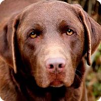 Adopt A Pet :: THATCH(THROWN AWAY!  PLS READ! - Wakefield, RI