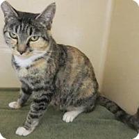 Adopt A Pet :: Sammy - Lincolnton, NC