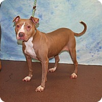 Adopt A Pet :: Rockstar - Newburgh, IN