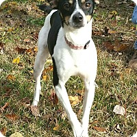 Adopt A Pet :: Petey ~ ADOPTED! - Saratoga Springs, NY