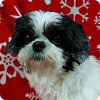 Adopt A Pet :: Blake Miller - Urbana, OH