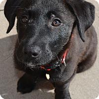 Adopt A Pet :: Oakley - Ogden, UT