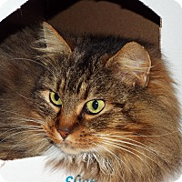 Adopt A Pet :: Gaia - Grants Pass, OR