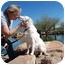 Photo 1 - Australian Shepherd Dog for adoption in Mesa, Arizona - Jett