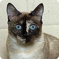 Adopt A Pet :: Clarice M - Sacramento, CA