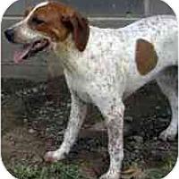 Adopt A Pet :: Kallie - Wakefield, RI