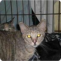 Adopt A Pet :: Petunia - Lombard, IL