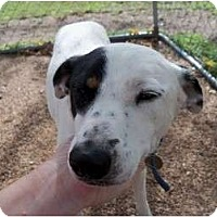 Adopt A Pet :: ANNA BELLE - Glenpool, OK