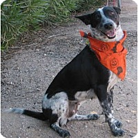 Adopt A Pet :: Ranier (adoption pending) - Phoenix, AZ