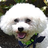 Adopt A Pet :: Cruiser - La Costa, CA