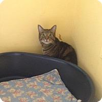 Adopt A Pet :: Max - Lancaster, MA
