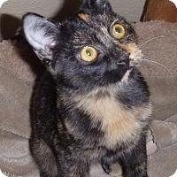 Adopt A Pet :: Seeka - Fountain Hills, AZ