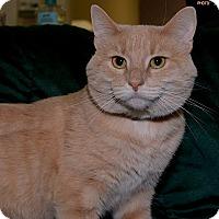 Adopt A Pet :: Tiggie - Medina, OH