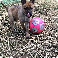 Adopt A Pet :: Gypsy - Nashville, TN
