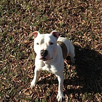 Terrier (Unknown Type, Medium) Mix Dog for adoption in Chatham, Virginia - Peterson