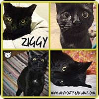 Adopt A Pet :: Ziggy & Marley - Xenia, OH