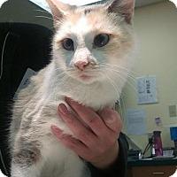 Adopt A Pet :: Tennessee - Edmonton, AB