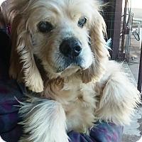 Adopt A Pet :: Grover - Santa Barbara, CA