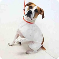 Adopt A Pet :: SIR DRAKE - Sanford, FL