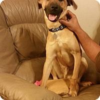 Adopt A Pet :: Levi - Huntsville, AL