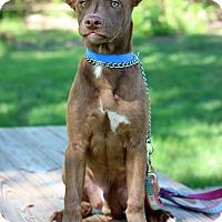 Adopt A Pet :: Jack - Waldorf, MD