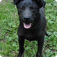 Adopt A Pet :: Lucy Diamond - Sunbury, OH