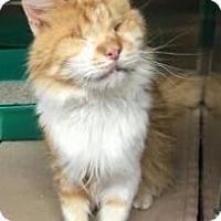 Adopt A Pet :: Clarence - Centerville, GA