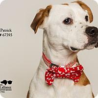 Adopt A Pet :: Patrick - Baton Rouge, LA