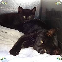 Adopt A Pet :: CARL & CORA - Marietta, GA