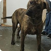 Adopt A Pet :: 5868 - Calhoun, GA