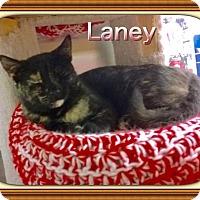 Adopt A Pet :: Laney - Atco, NJ