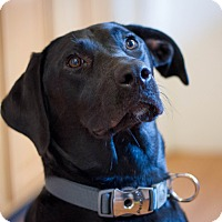 Adopt A Pet :: Jasna (bonded to Savannah) - Bowie, MD