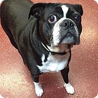 Adopt A Pet :: Chumley - Fargo, ND