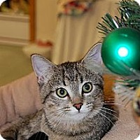 Adopt A Pet :: Tatiana - Greenville, IL