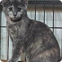 Adopt A Pet :: Shirley - Seminole, FL