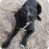 Adopt A Pet :: Skunk - Cedar City, UT